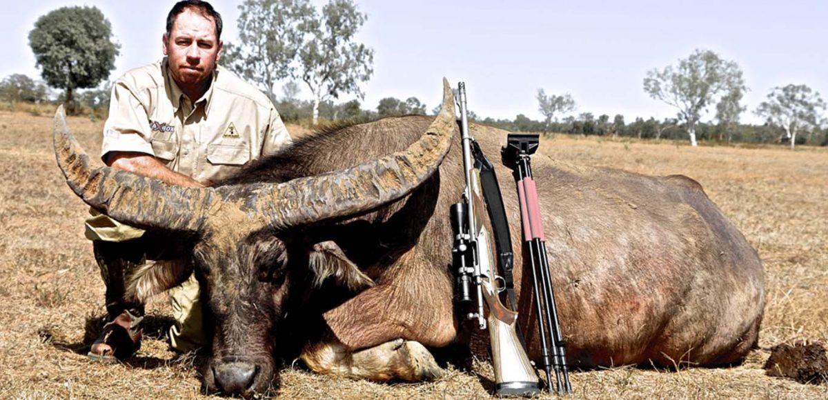 Australian Buffalo Hunting